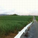 kourijima2.jpg